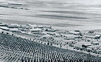 The fields of the Jezreel Valley - Beith Alpha (1930)